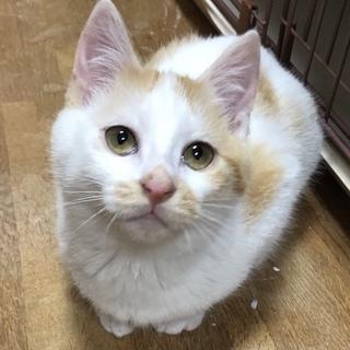 遊ぶの大好き!やんちゃな茶白猫サンタくん