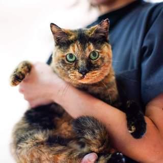 おヒザ大好き!べったりタイプのシニア猫