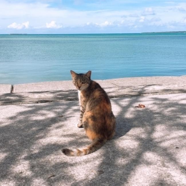 Cat Bellのカバー写真