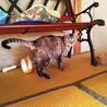 急募!行き場の無い高齢者のお家の猫10匹 サムネイル3
