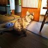 急募!行き場の無い高齢者のお家の猫10匹 サムネイル6