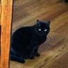 急募!行き場の無い高齢者のお家の猫10匹 サムネイル7
