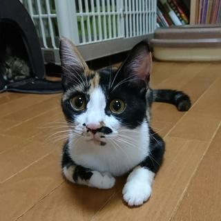 おしゃまで世話焼きの三毛猫・恵みちゃん