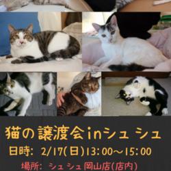 猫さんの譲渡会inシュシュ岡山店