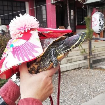 2019年初詣の果芽実さん(市谷亀岡八幡宮)