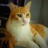 超甘えん坊のデカ猫&子猫お世話大好きな五郎蔵さん