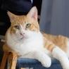 超甘えん坊のデカ猫&子猫お世話大好きな五郎蔵さん サムネイル2