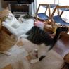超甘えん坊のデカ猫&子猫お世話大好きな五郎蔵さん サムネイル5