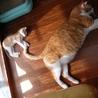 超甘えん坊のデカ猫&子猫お世話大好きな五郎蔵さん サムネイル7