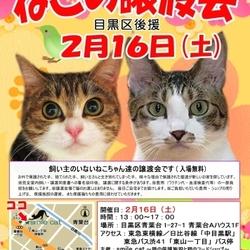 ★2月16日(土)「ねこの譲渡会 目黒区後援」smile cat@中目黒(室内)