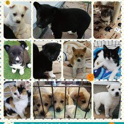 ★コロコロモフモフ犬猫の譲渡会★倉敷市玉島