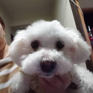 飼い主死亡で保健所に持ち込まれたシニア犬