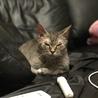 ラパーマ  5歳  ママ引退猫ちゃん サムネイル5