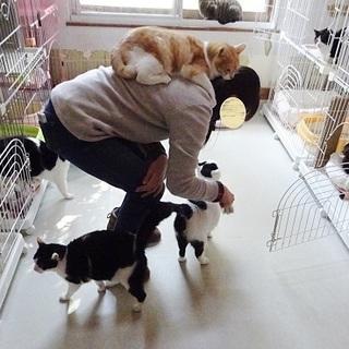 淡路島に猫に会いに来ませんか?