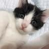 生後4ヶ月の猫ちゃんの里親募集してます。