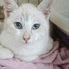 沖縄の猫/とても甘えん坊な兄妹/生後4か月