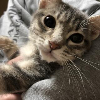 小さめパステルカラーの猫ちゃん一時停止