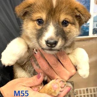 M55 幼い、可愛い子犬です。
