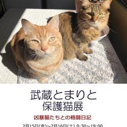 武蔵とまりと保護猫展