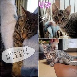 保護猫の譲渡会 三重間名張市