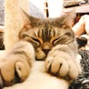 保護犬猫情報発信センターラ...(保護活動者)
