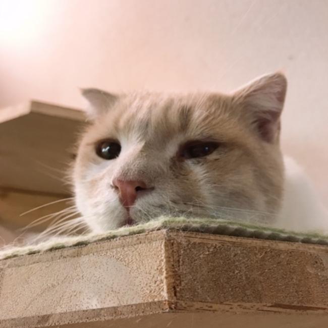 保護犬猫情報発信センターラフスペースのカバー写真