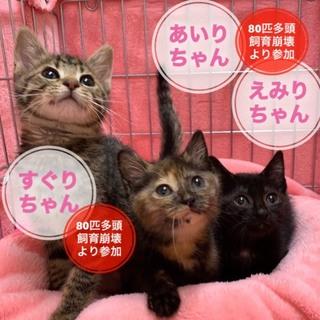 生後2か月: 激かわ3姉妹の1匹あいりちゃん