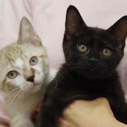 ☆保護センターで猫の譲渡会☆