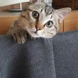 夫に興奮する猫