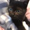とにかく可愛い黒猫ちゃんの瑠衣君 サムネイル4