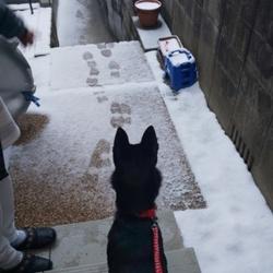 「初雪」サムネイル2