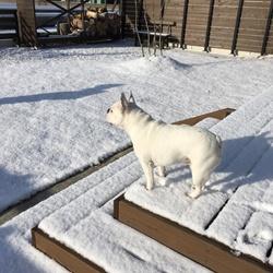 「雪の日」サムネイル2