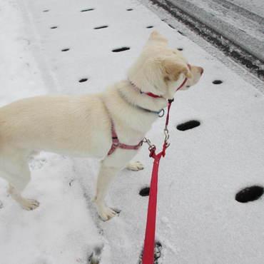 いつもの散歩道も白い
