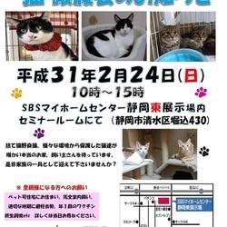 静岡市清水区で猫の譲渡会開催します