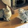 目のくりくりした可愛い子猫姉妹です。 サムネイル3