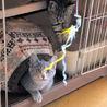 目のくりくりした可愛い子猫姉妹です。 サムネイル4