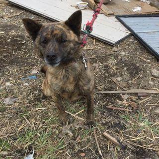 【至急】残土置き場に置き去りの甲斐犬5匹