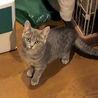 目のくりくりした可愛い子猫姉妹です。 サムネイル6