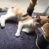 人も猫も大好き❤三毛猫みかんちゃん サムネイル5