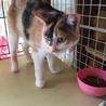 人も猫も大好き❤三毛猫みかんちゃん サムネイル6