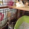 人も猫も大好き❤三毛猫みかんちゃん サムネイル7