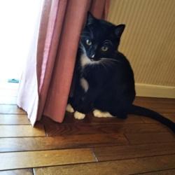 登録ボランティアによる猫の譲渡会