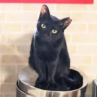 はなみずき☆愛らしい黒猫の女の仔