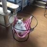 保健所で耐えていた猫ムタさん サムネイル4