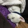 さっきまで遊んでたのに、爆睡。