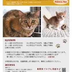 上尾市で365日年中無休!譲渡会&保護猫カフェ