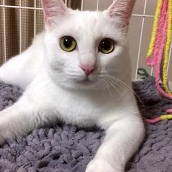 *子猫〜大人猫のネコ譲渡会* サムネイル2