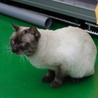 譲渡対象猫紹介 サムネイル5