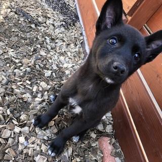 人気の黒犬!とても賢い女の子1