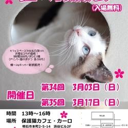 明石【猫の譲渡会】猫まみれwithカーロ 第34回